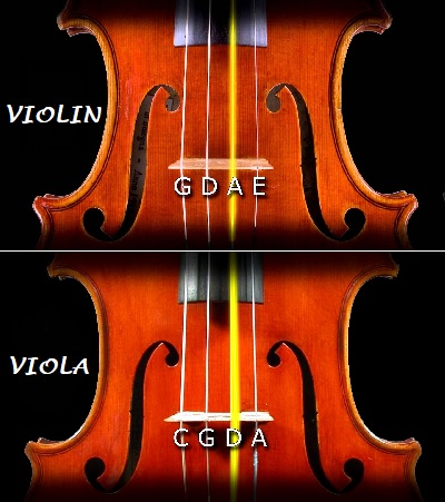 String Difference Between Violas and Violins